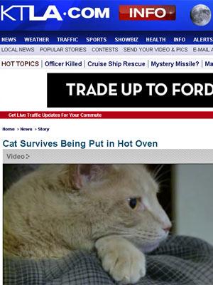 Reprodução mostra gato que sobreviveu