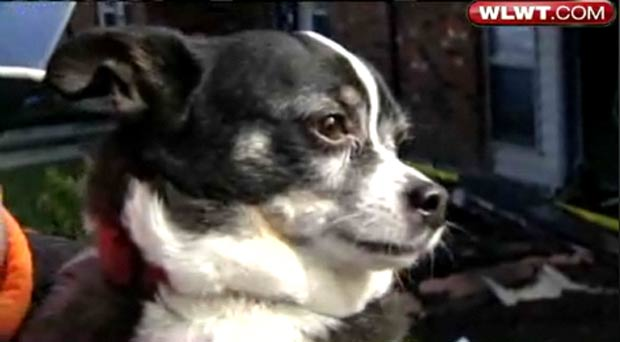 Cão chamado 'Demônio' escapou ileso de incêndio.