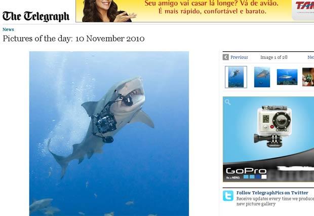 Tubarão-tigre arrancou câmera das mãos de fotógrafo.