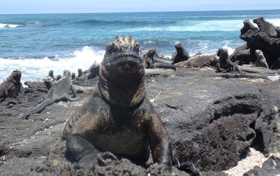 Galápagos (Foto: Rede Globo)