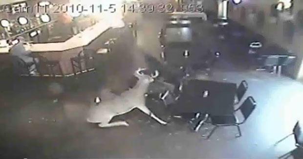 Veado invade bar