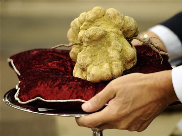 A trufa branca de 900 gramas é mostrada neste domingo (14) após leilão na cidade de Alba.