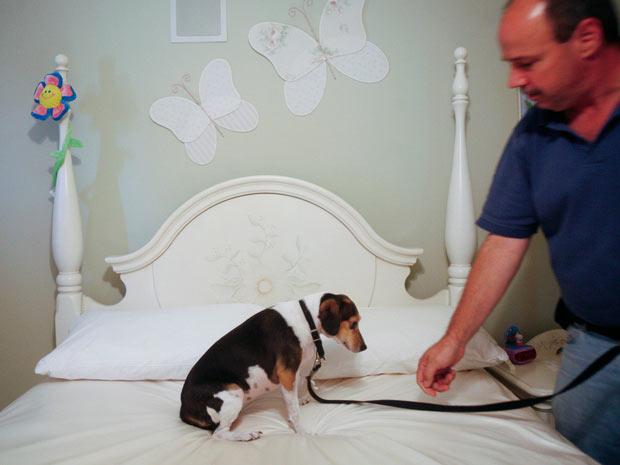 Cão treinado busca percevejos em casa de Nova York