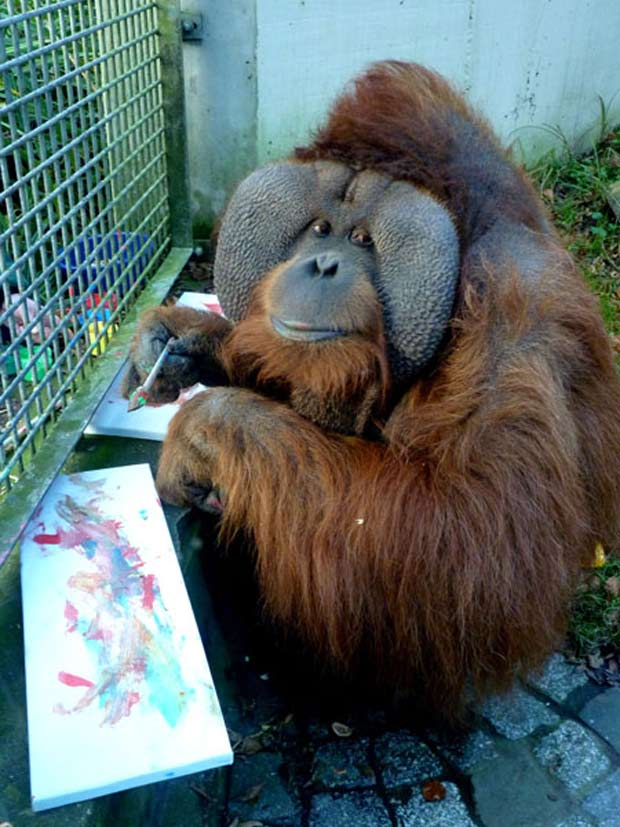 Orangotango faz sucesso em zoológico ao pintar quadros.
