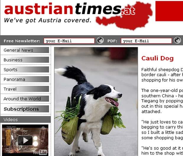 Cão foi treinado para fazer compras em Changsha.