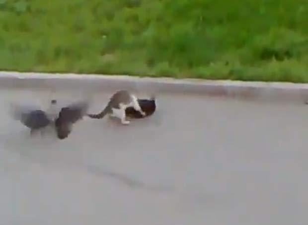 Aves não se afastaram nem após luta envolvendo dois gatos.
