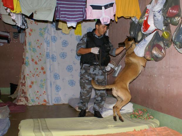 Cães foram usados durante revista na Casa de Prisão Provisória de Palmas