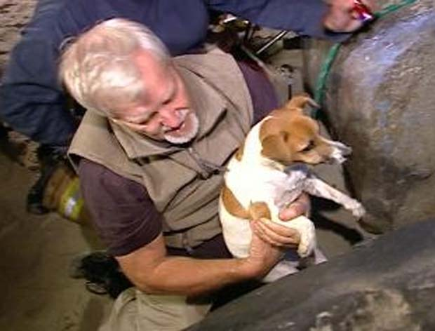 Cadela ficou presa por quase 30 horas em rochedo.