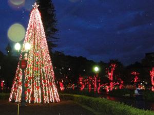 Árvore de dez metros de altura dá charme especial à Praça da Liberdade.