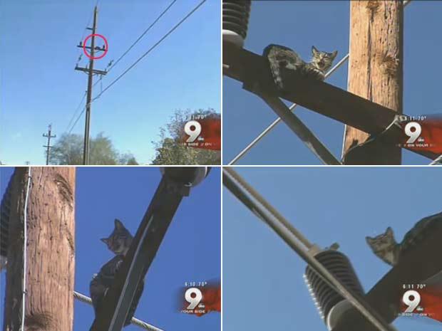 Gato foi visto no alto de um poste de energia elétrica.