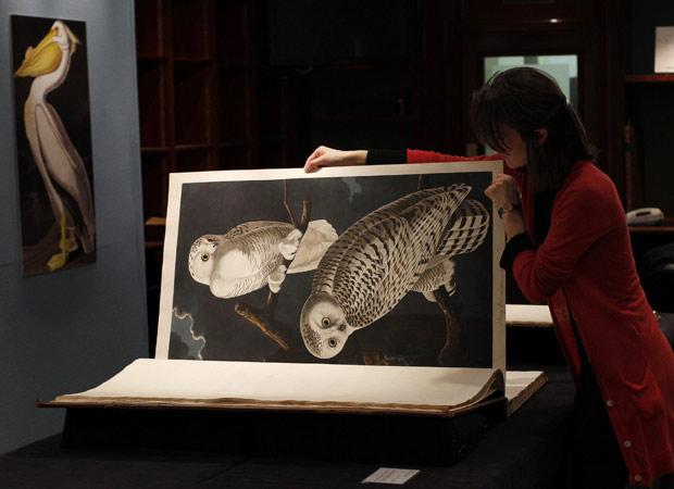 Página do livro 'Birds of America', que foi leiloado por mais de 7 milhões de libras