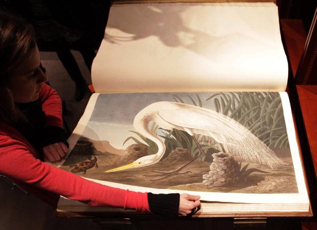 O comprador do livro na Sotheby's foi um marchand londrino; há apenas 11 exemplares de 'Birds of America' em mãos particulares