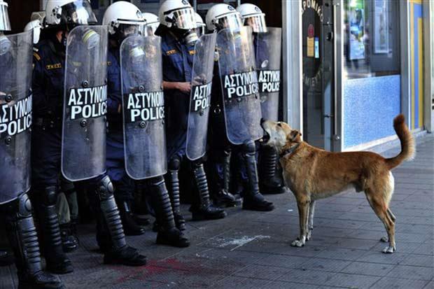 'Loukanikos' durante protesto na quarta-feira.