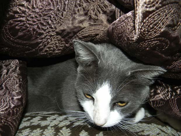 Felino havia desaparecido durante o furacão Katrina.