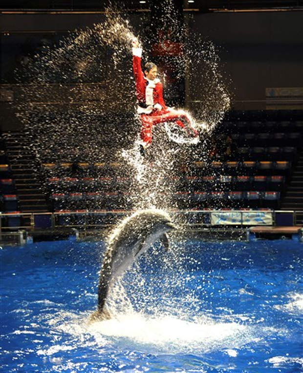 Treinador de golfinhos usa traje de Papai Noel durante show no dia 13 de dezembro em Tóquio, no Japão.