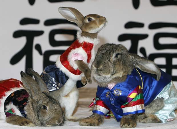Coelhos usaram o traje típico coreano 'Hanbok'.