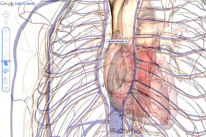 Aplicativo permite explorar o corpo humano em detalhe
