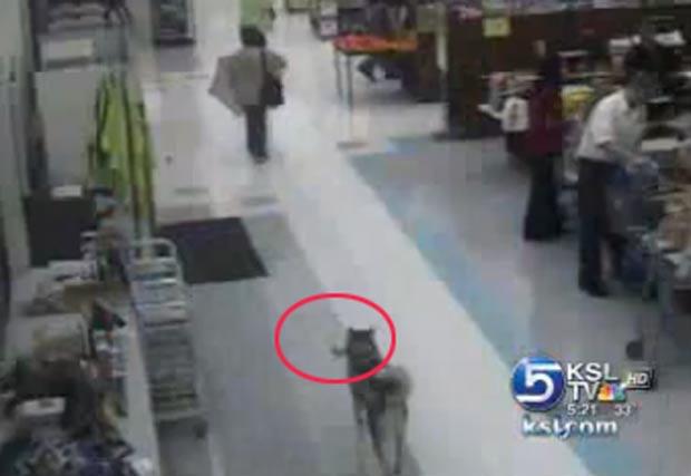 Cão entrou no supermercado e fugiu com um osso.