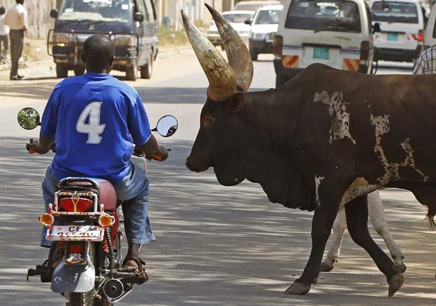 Motociclista dá passagem para animais em cidade do Sudão.