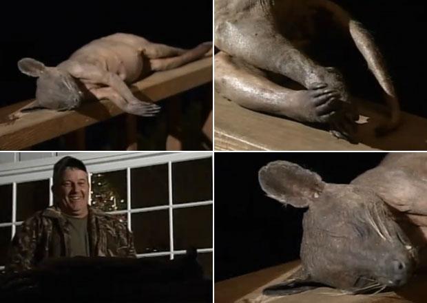 Mark Cothren mostra o corpo do suposto 'chupacabras', morto no quintal de sua residência nos Estados Unidos.