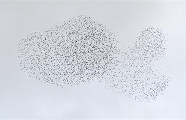 Os pássaros formaram uma figura semelhante a um peixe.