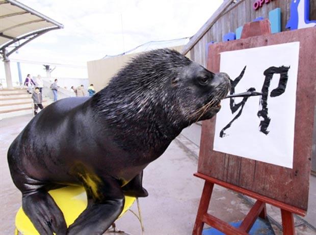 Leão-marinho escreve a palavra 'coelho' em caracteres chineses.