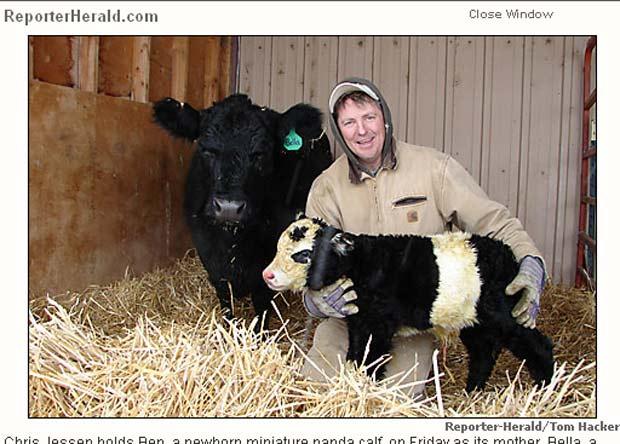 Chris Jessen segura bezerro que nasceu com 'aparência' de panda.