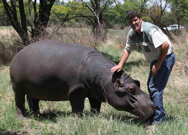 Marius Els cuida do hipopótamo desde que ele tinha cinco meses.