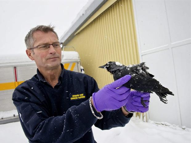 Resgatista mostra pássaro morto nesta quarta-feira (5) na cidade sueca de Falkoeping.