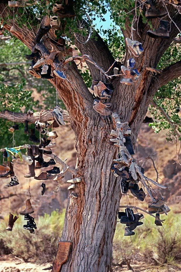 Árvore turística foi alvo de vândalos.