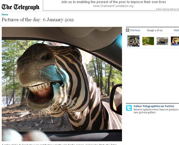 Irina Koehler fotografou zebra sorrindo em parque nos EUA.