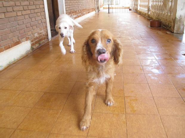 Dois dos cães que poderão ficar sem lar