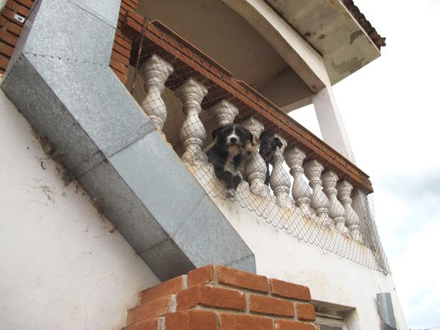 Cães em sacada de chácara no interior de São Paulo
