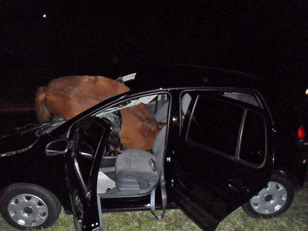 acidente cavalos salto