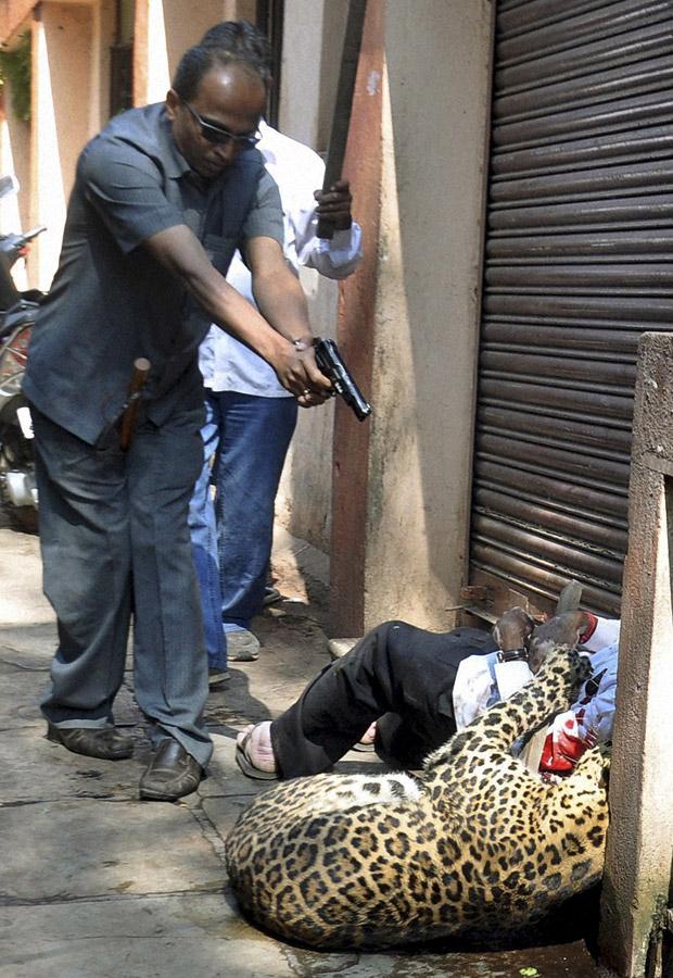 Policial indiano atira em leopardo que atacava um passante na cidade de Karad neste domingo (9). O felino já havia ferido várias pessoas até ser atingido, segundo a imprensa local. A origem do animal ainda era desconhecida.