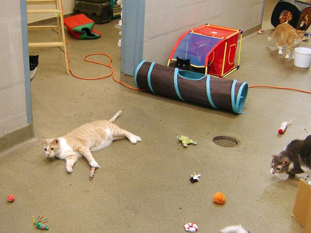 A solução, segundo os pesquisadores, é criar os gatos num ambiente instigante, que tenha áreas de esconderijo, brinquedos, cama confortável e outras atrações. Os gatos também precisam de atenção constante, brincadeiras e de manter uma rotina rígida. As c