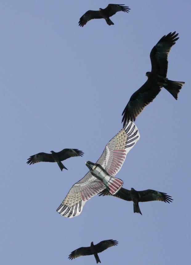 Aves cercam pipa em formato de pássaro.