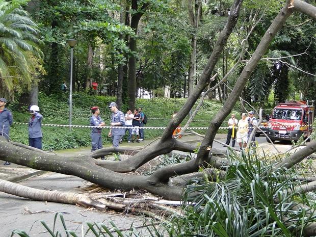 Árvore cai e mata uma mulher em BH