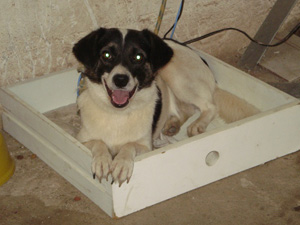 Cachorro em abrigo em Teresópolis - Chuvas Região Serrana