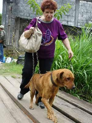 Voluntária passeia com cão em abrigo - Chuvas Região Serrana