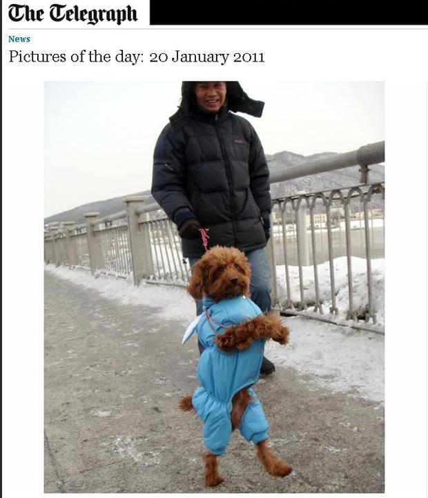 Cão chinês passeia todos os dias à margem do rio Songhua, com o dono Dou Xianhui. Atração na cidade, o poodle foi treinado por Xianhui apenas por uma semana, logo que nasceu. 'Depois ele começou a andar assim sozinho e nunca mais parou. Agora, ele raramente anda de quatro, onde quer que esteja', conta o dono, orgulhoso.