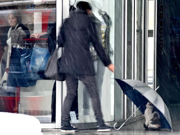 Gato protege-se de nevasca sob guarda-chuva em frente a loja em Skopje, capital da Macedônia, na sexta-feira (28).