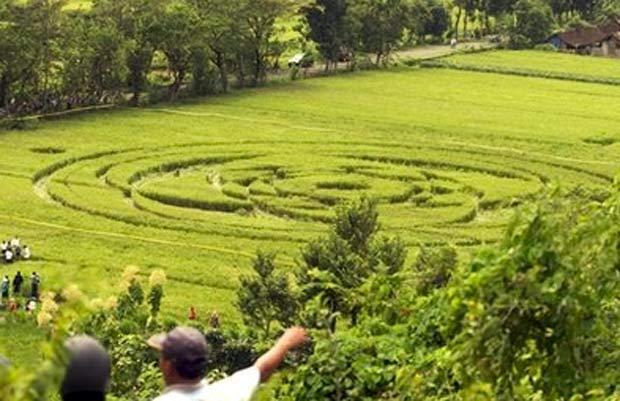 círculo de 70 metros de diâmetro apareceu em uma plantação de arroz em Sleman.