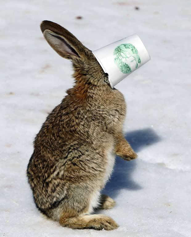 Um coelho foi flagrado nesta segunda-feira em Pequim, na China, com a cabeça entalada em um copo.