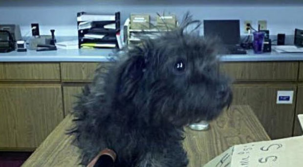 Stacey Champion tentou enviar um cão pelo correio.