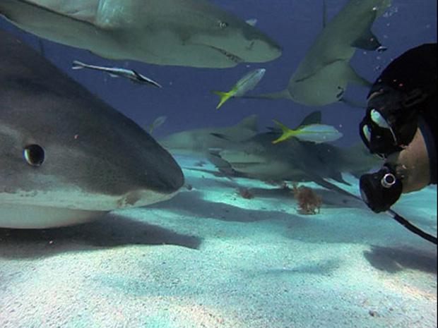 Americano não tem medo de chegar perto dos tubarões (Foto: Jim Abernethy/Barcroft Media )