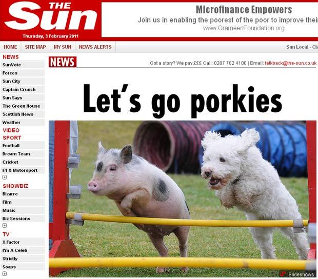 Porquinha 'pensa' que é cão e chega a saltar obstáculos. (Foto: Reprodução/The Sun)