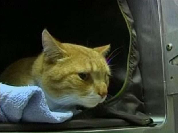 Gato que estava desaparecido há 3 anos é encontrado na Flórida. (Foto: Reprodução)