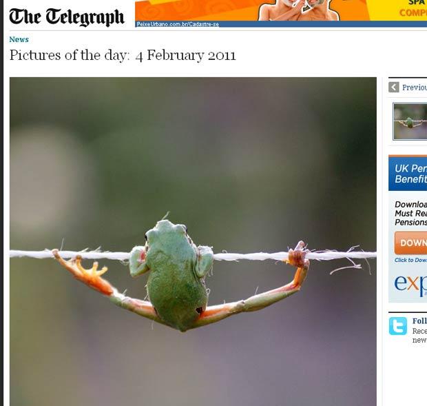 Rã se equilibra em fio a dois metros de altura. (Foto: Reprodução/Daily Telegraph)