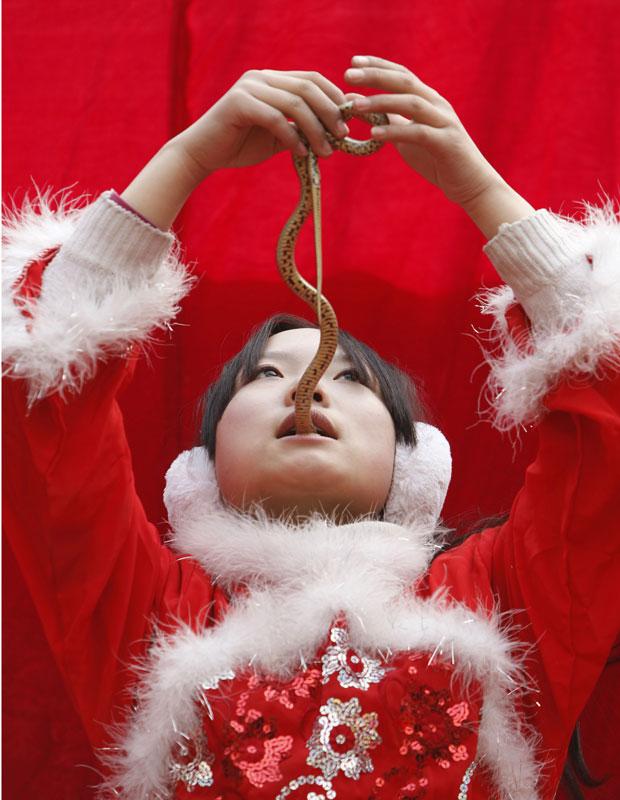 Garota chinesa engole parte de cobra durante apresentação em feira em Pequim, neste sábado (5). O show faz parte das celebrações do Ano Novo no país. (Foto: AP)